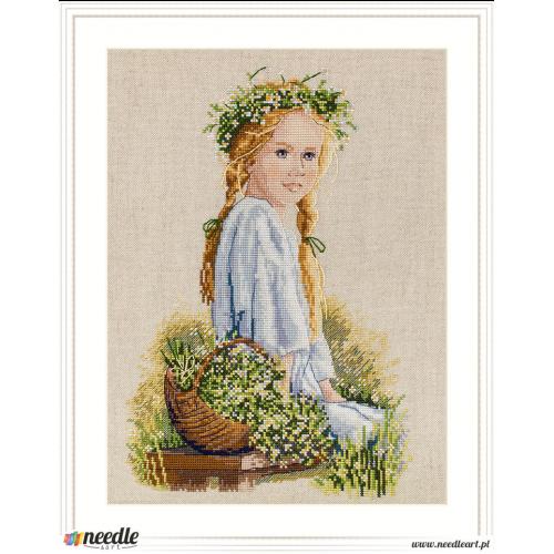 Daisies (Lucan)