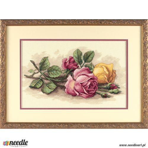 Rose Cuttings
