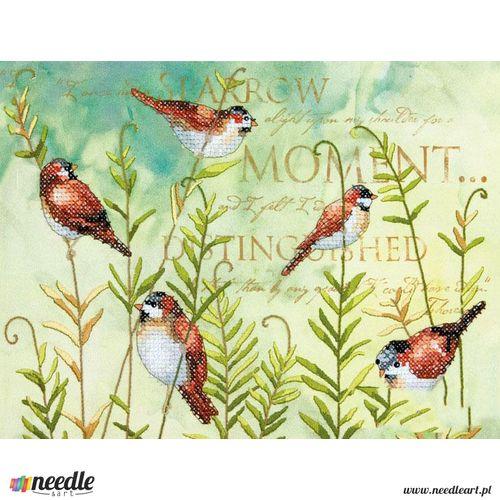 Birds on Ferns