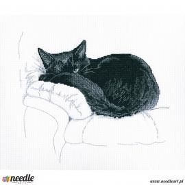 Among black cats 2