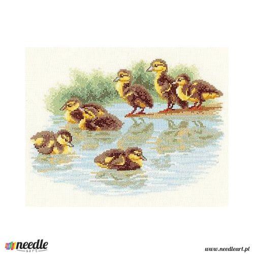 Baby Ducks First Swim